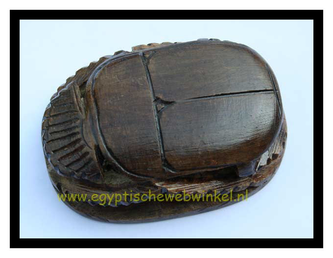 Big brown scarab
